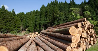 Local Forestry Finalist in Canterbury Champion Awards