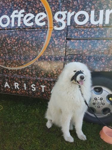 'Bo' propping up the coffee van